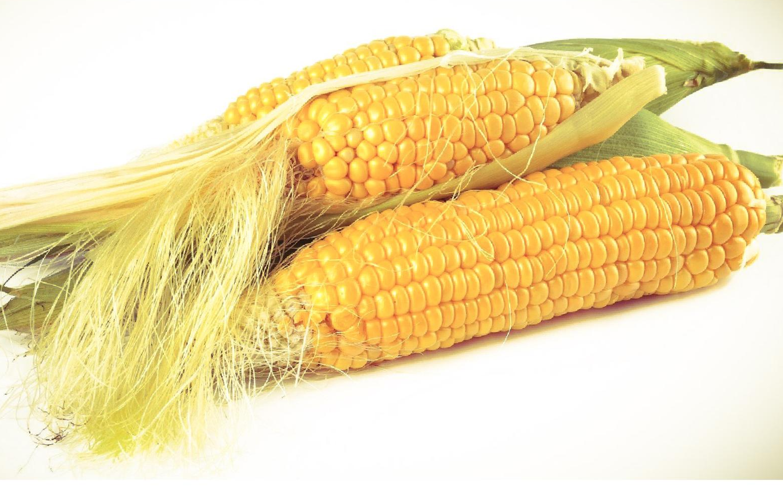 Onnodige verplichte oogstdatums, een regelrechte ramp voor boeren!