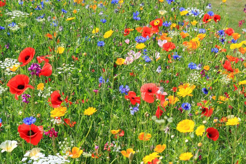 Zevenaar kiest voor meer biodiversiteit: Vervolg op voorjaarsactie Red de Bij! – versterking Biodiversiteit